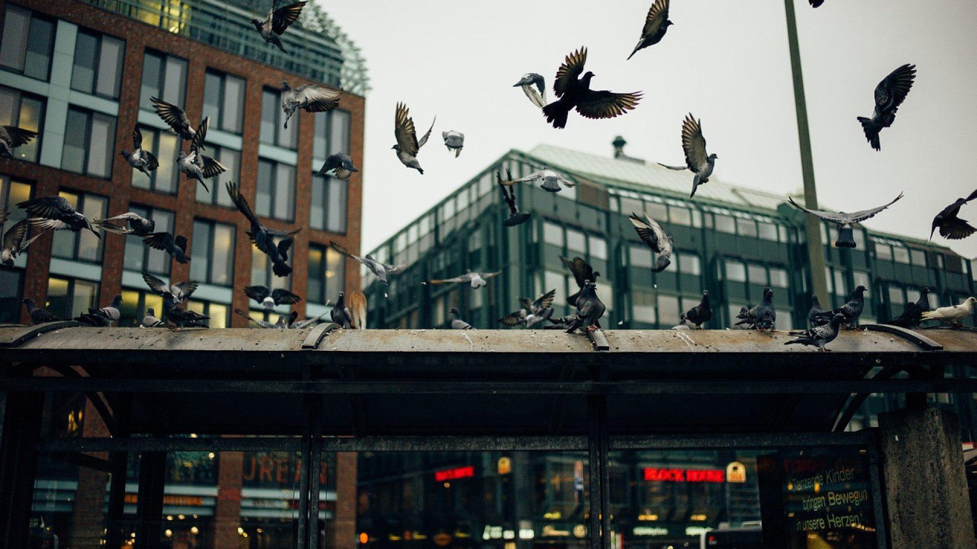 Pics anti-oiseaux